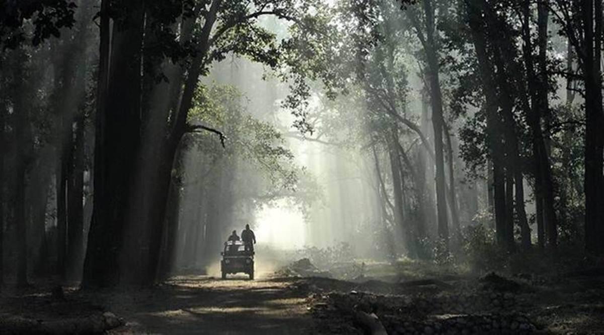 Uttarakhand wildlife board clears proposal to denotify elephant reserve