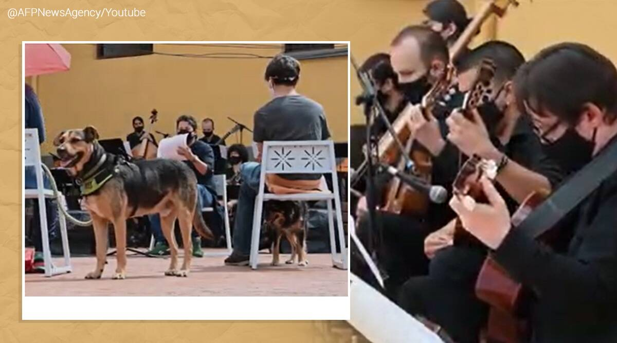 Colombia, Colombian orchestra performs concert for canines, Christmas, New Year tradition Colombia, animal rights, viral, indian express